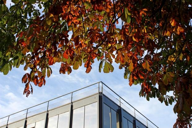 autumn uni.jpg2
