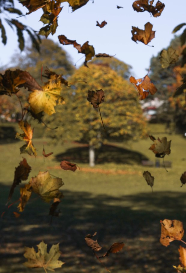 Falling20leaves20picture20ps203-2