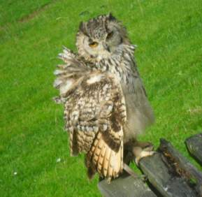 OwlFalconryCentre